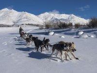 trainati dai nostri husky