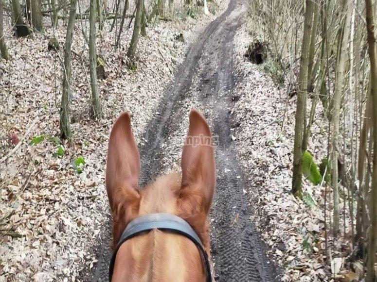 In sella nel bosco