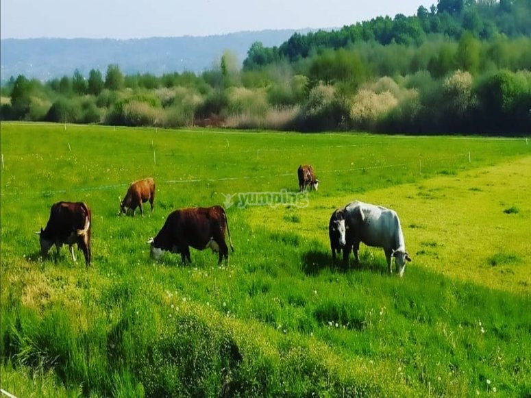 Viste durante la passeggiata a cavallo