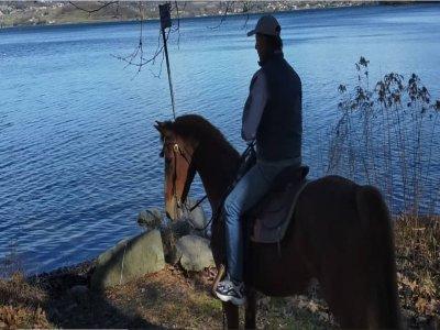 Passeggiata a cavallo al Lago di Viverone di 3 ore