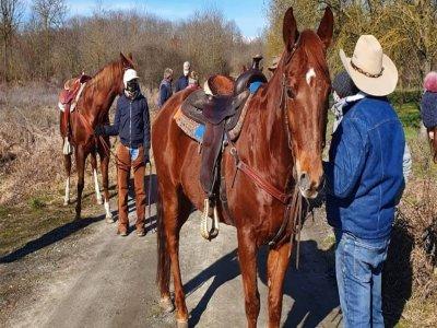 Passeggiata a cavallo a Bric Camolesa di 4 ore