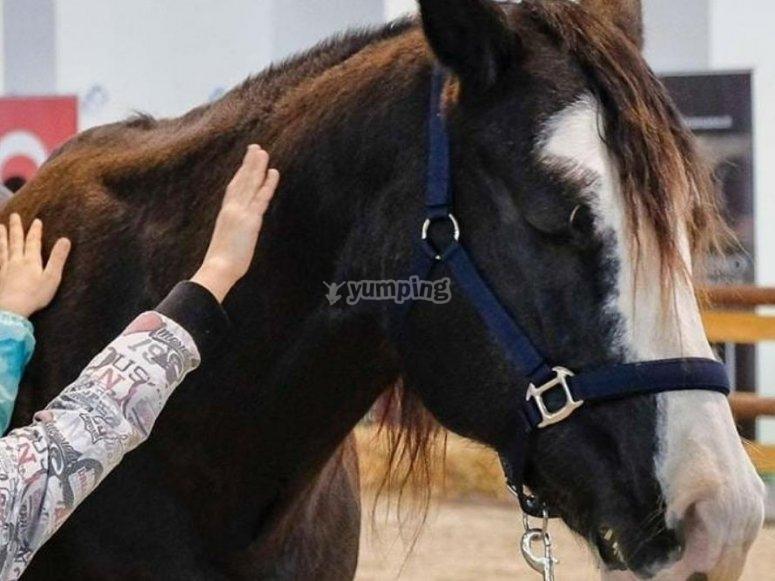 `horse ride