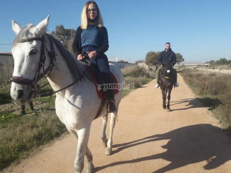 Docili cavalli