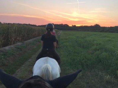 Horse ride in the Mincio park 3 hours