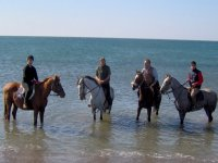 In acqua con i cavalli