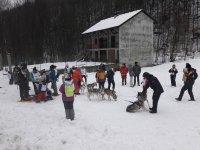 Cani da neve