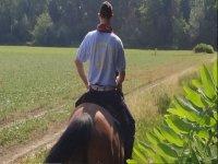 Passeggiata a cavallo di due ore