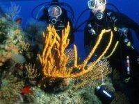 Diving excursions