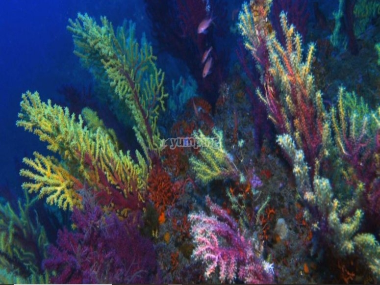 The colored seabed of Sicily