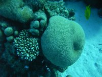 Splendidi Coralli Mar Rosso