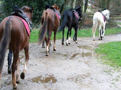 Scuola di preparazione equestre