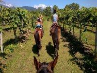 Cavalli in escursione