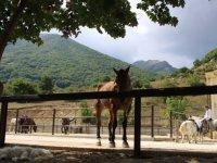 Cavallo al fresco