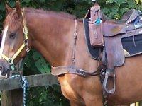 Cavallo pronto per partire