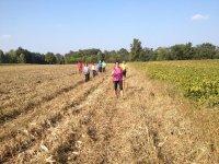 Camminata nei campi