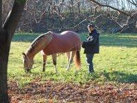Con il cavallo