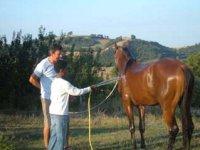 Facendo il bagno al cavallo