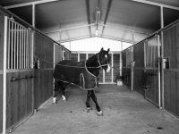 Cavallo nelle stalle