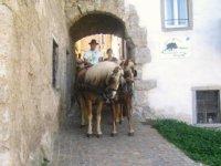 Passeggiata in cavallo