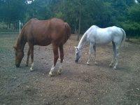 I nostri cavalli Kabir e Peseta