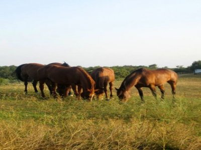Agriturismo Centro Ippico La Capretta Passeggiate a Cavallo