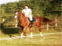 Settimane equestri