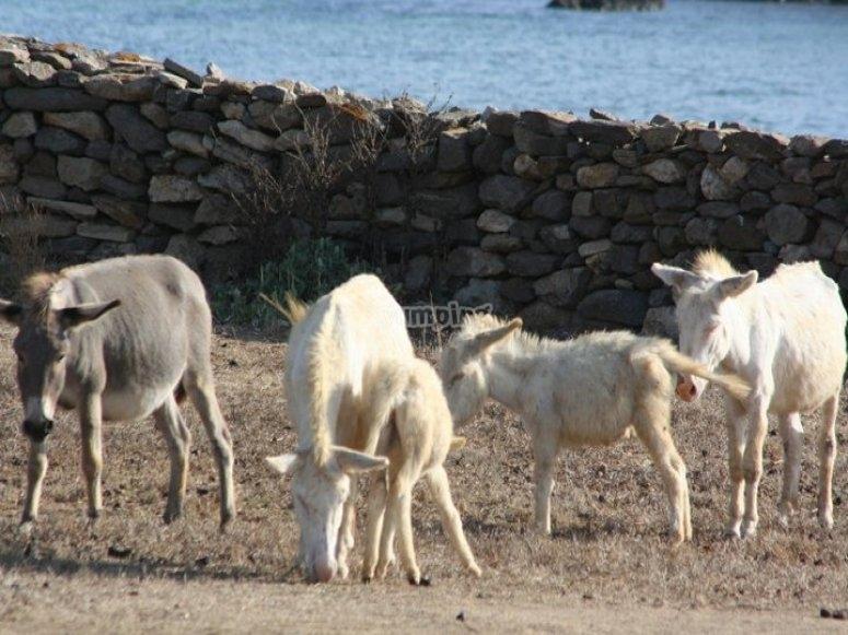 Entroterra della Sardegna
