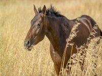 i meravigliosi cavalli liberi
