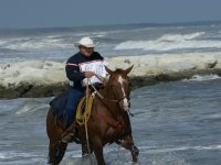 In mare sul cavallo