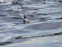 A Nettuno per la Scuola kayak