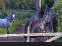 I cavalli del centro