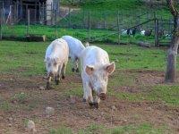 Nella nostra fattoria