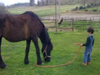 Conoscendo i cavalli