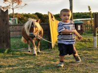 Col pony