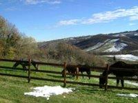 Cavalli nel verde