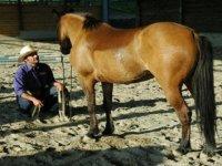 Parlando al cavallo