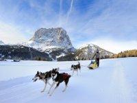 Sleddog - escursione con slitta trainata da una muta di cani