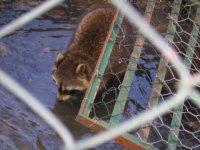 Animali del biooparco