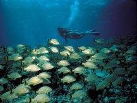 Un banco di pesci