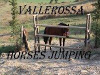 Vallerossa horses jumping