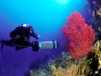 corallo rosso tremiti