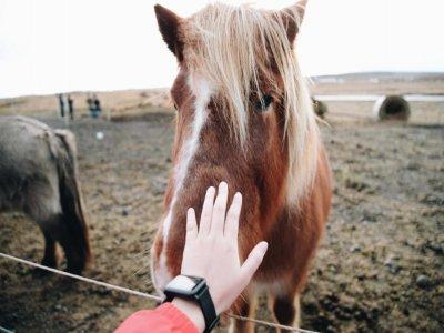 Centro Equestre La Pineta