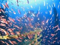Turbine di pesci