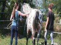Assieme ai nostri cavalli