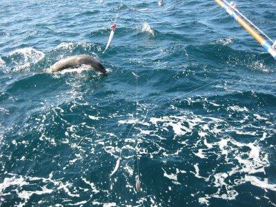 Leuca Explorer Pesca