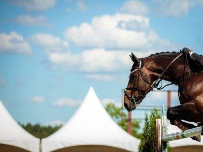 Centro Equestre la Pineta a Cavallo