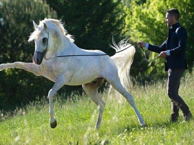 Equestrian Club Le Camerelle