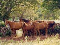 A cavallo in Sardegna