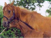 Attività equestri in hotel Sardegna