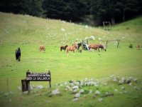 Pony al pascolo
